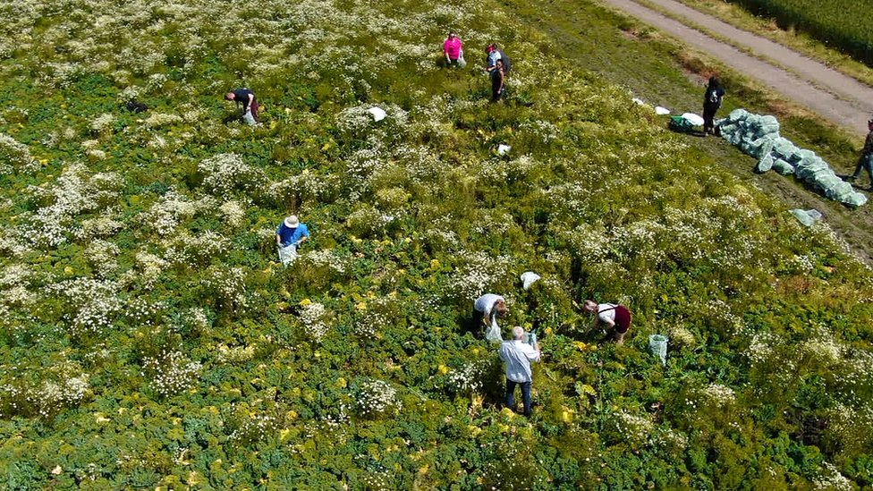 aerial view of gleaners in a field