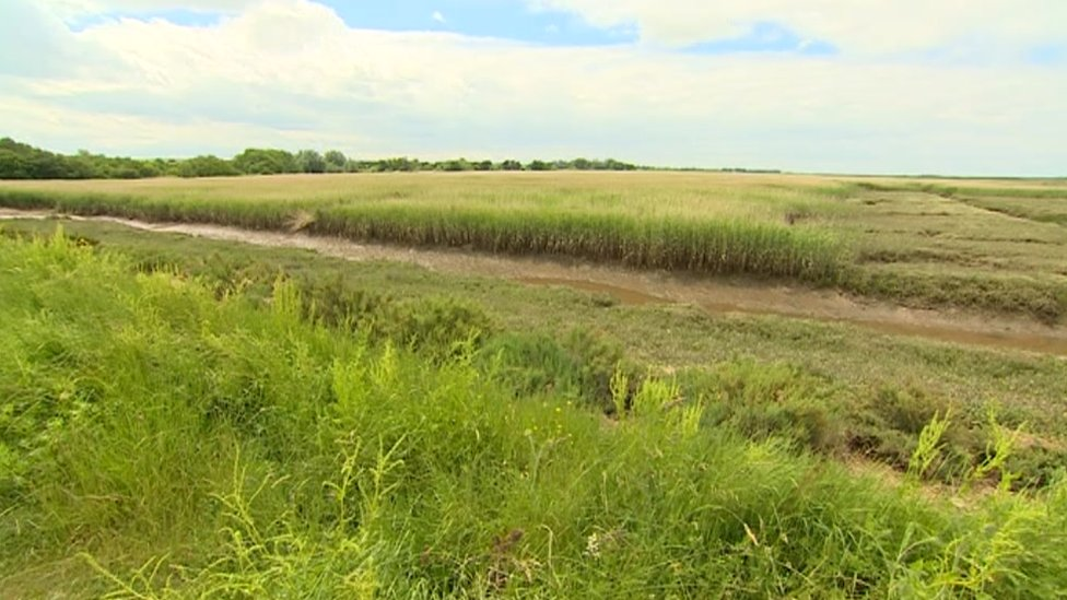 Reed beds, Titchwell Marshes