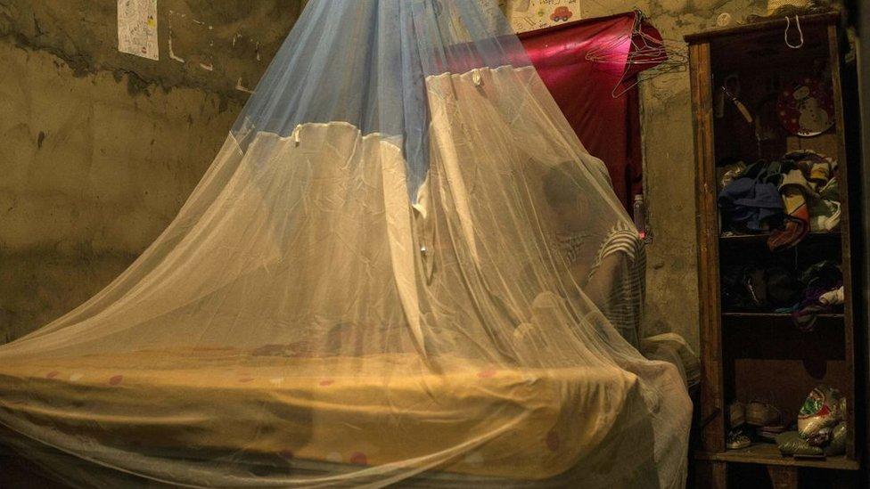 En Barcelona, Venezuela, una mujer amamanta a su bebé cubierta por un mosquitero para evitar la picadura del mosquito que luego desarrolla la malaria.