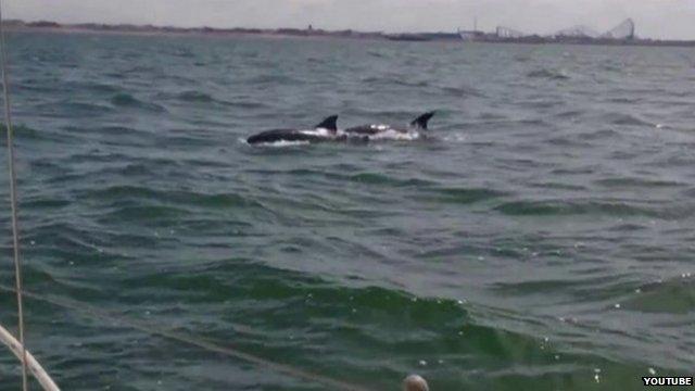 Dolphins Blackpool