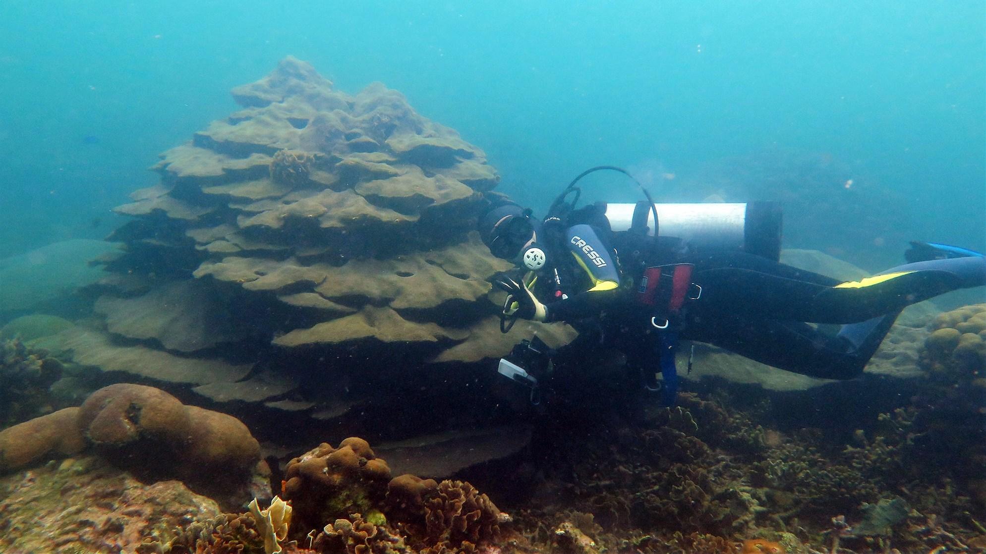 Valeria Pizarro buceando en el arrecife Varadero.