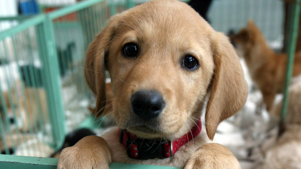 Puppy and kitten sales at pet shops set to be banned