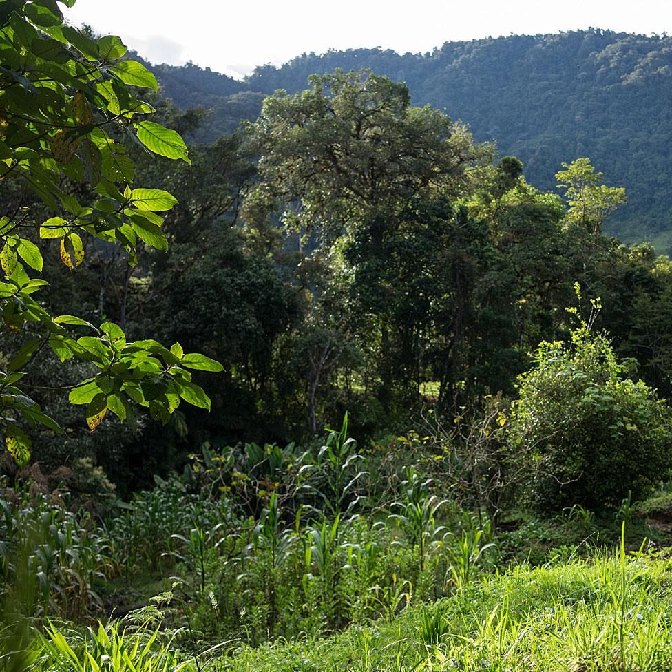 Campo colombiano
