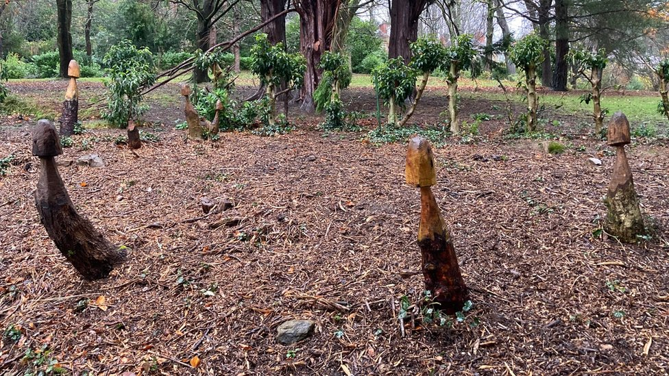 Swansea mushroom carvings removed after 'phallic' complaint thumbnail
