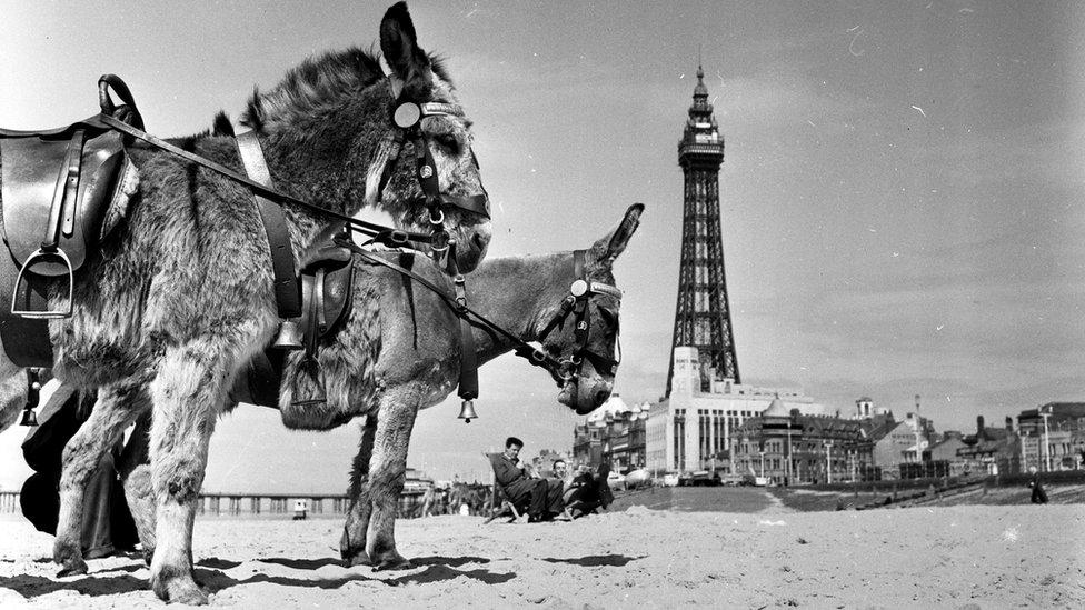 donkeys at Blackpool 1956