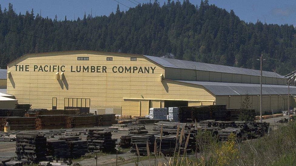 La empresa maderera Pacific Lumber Company