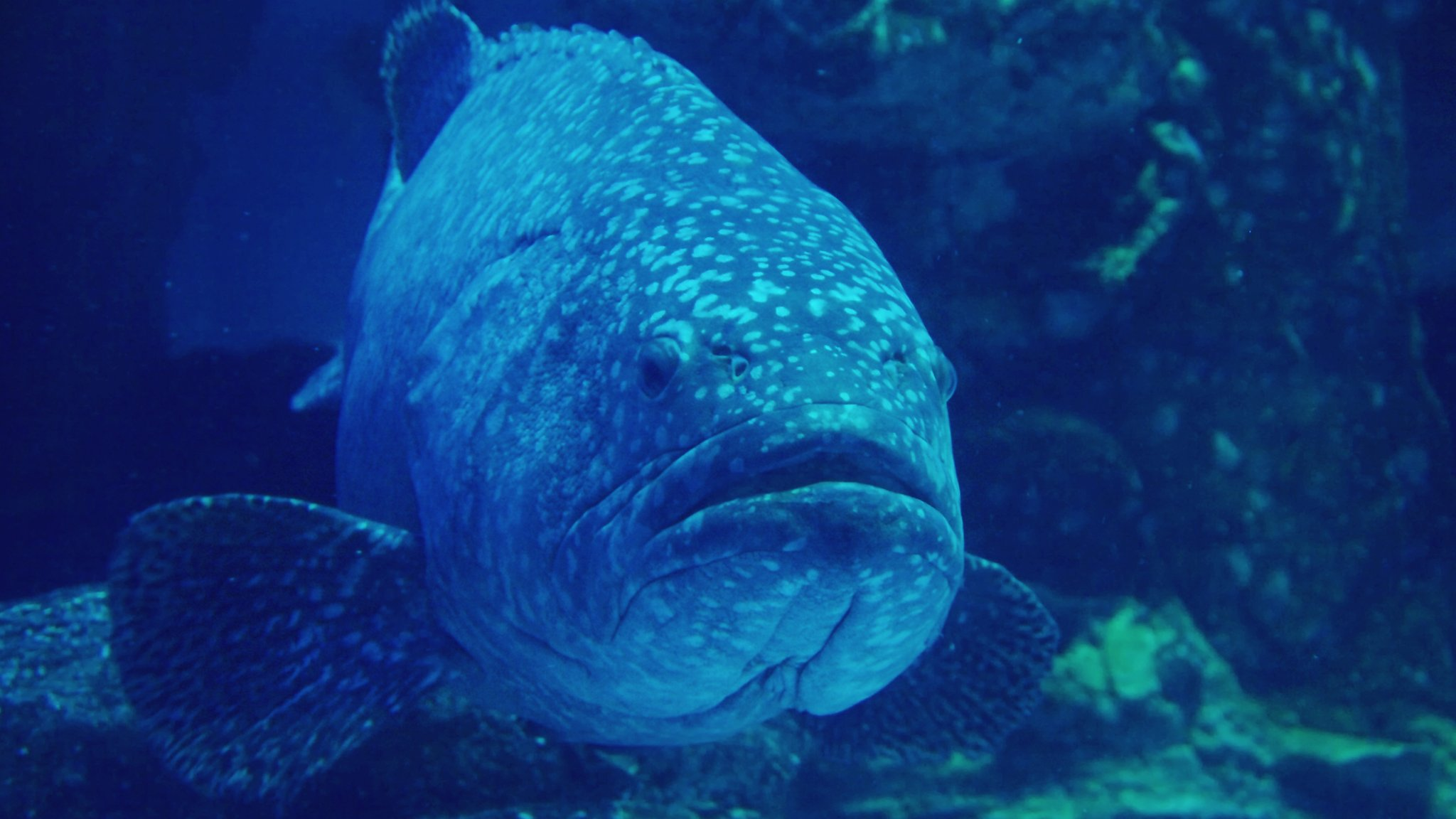How fish and shrimps could be recruited as underwater spies