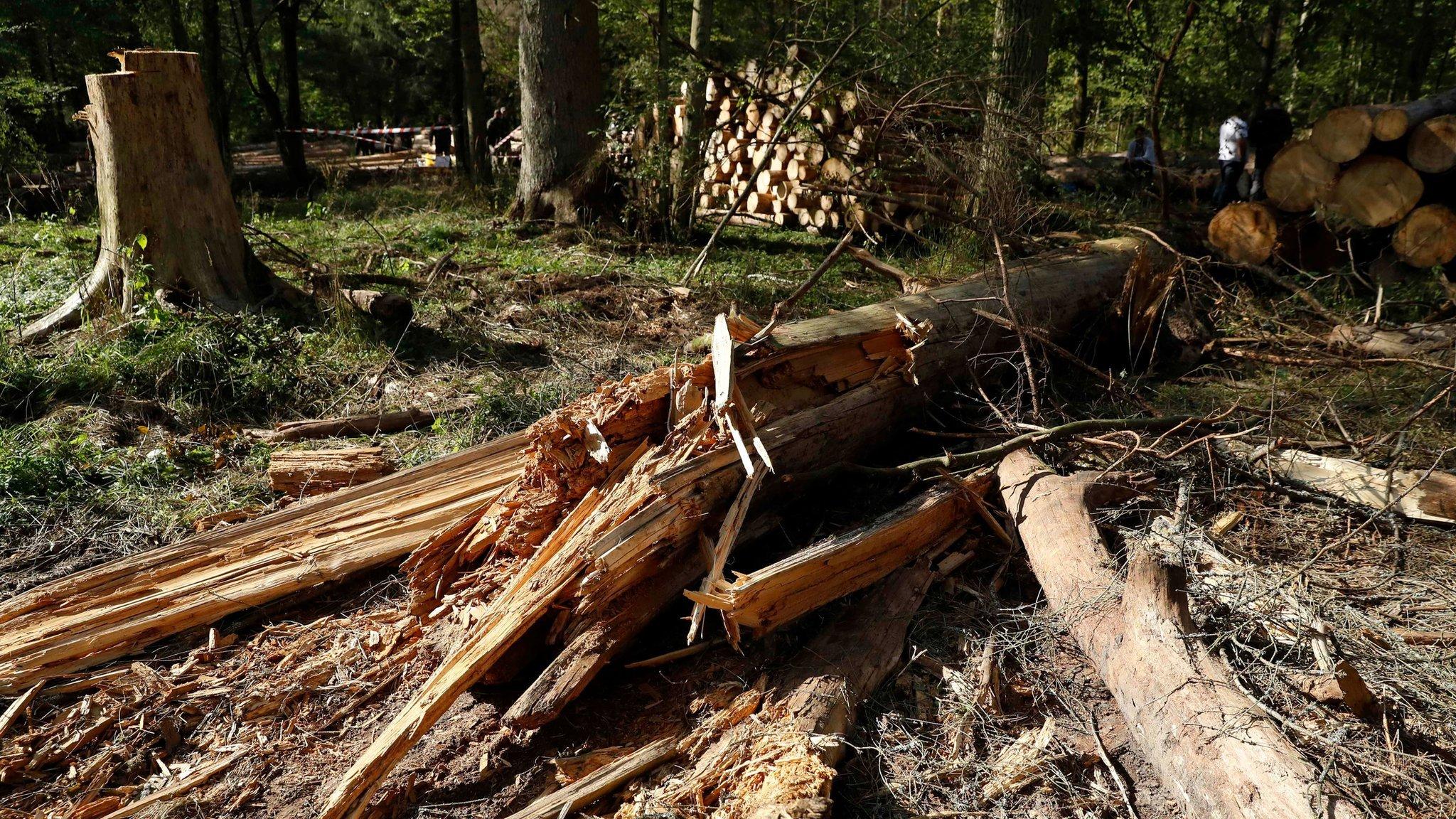 Bialowieza forest: Poland broke EU law by logging