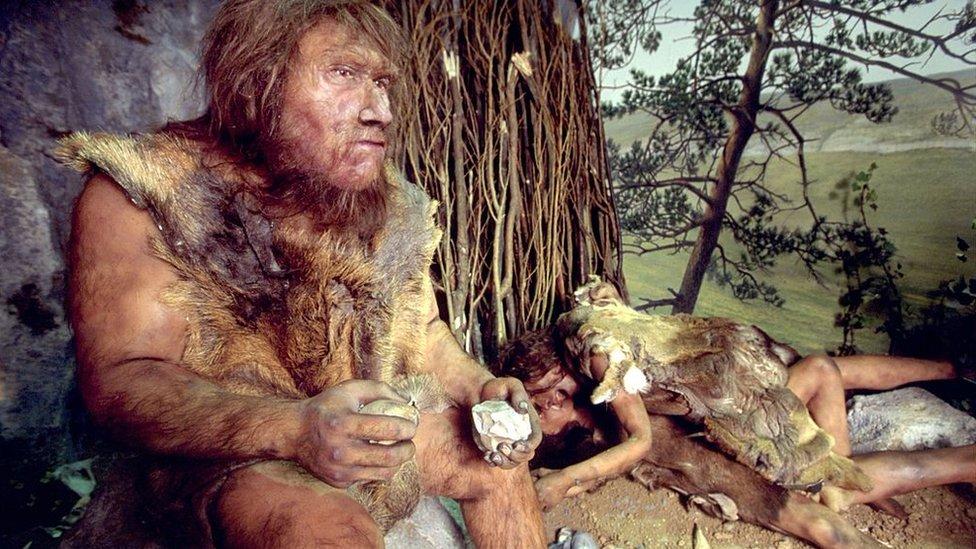 Neandertales.