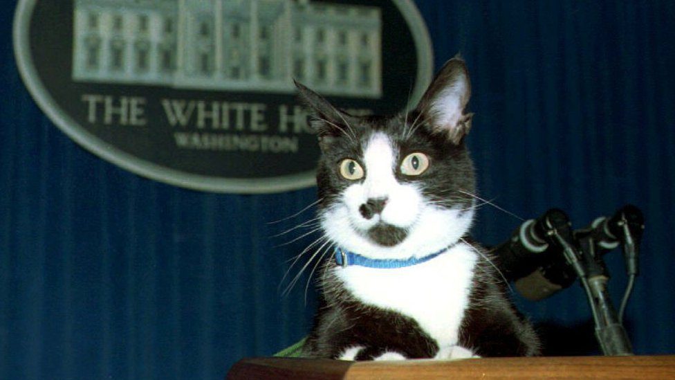 Socks, the White House cat, sits atop the podium in the White House press briefing room on 19 March 1994