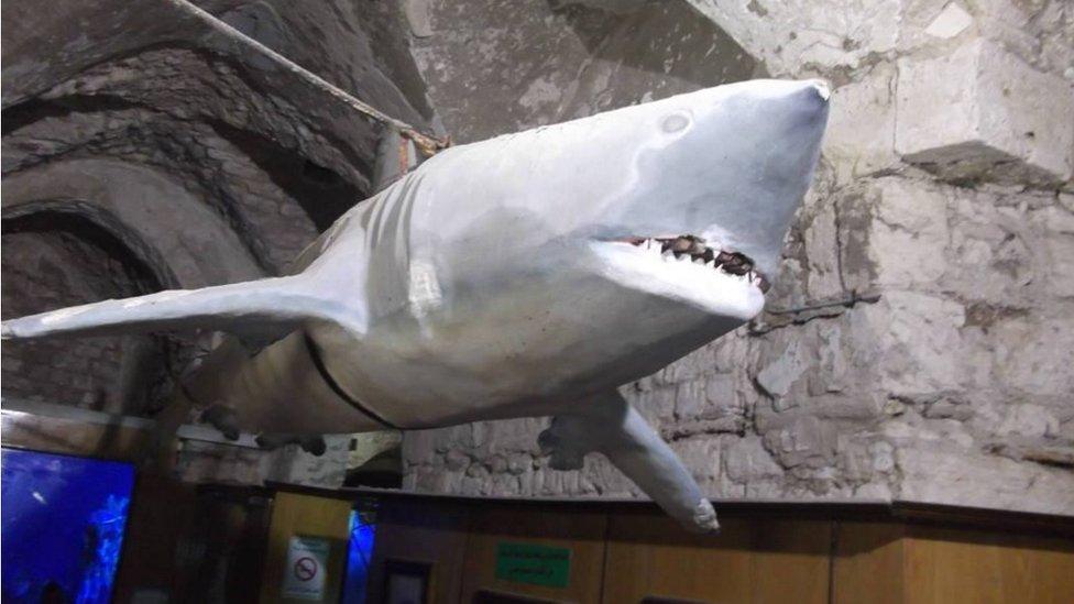 القرش الأبيض داخل متحف الأحياء البحرية بالإسكندرية - من الكائنات المهددة بالإنقراض