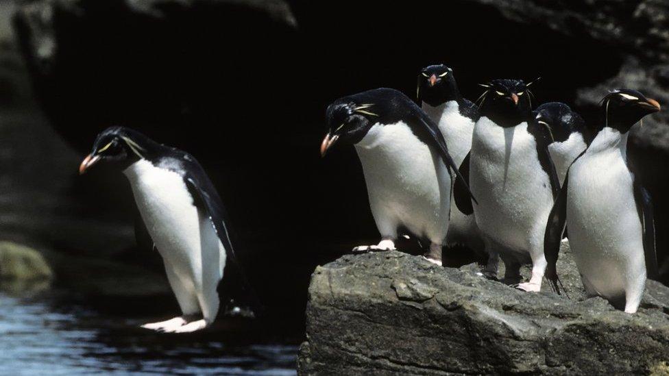 Habitat loss 'making animals like compulsive gamblers'