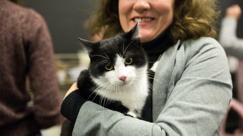 Mačka i nova vlasnica