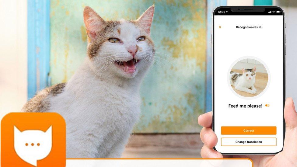 Publicidad de la app MeowTalk