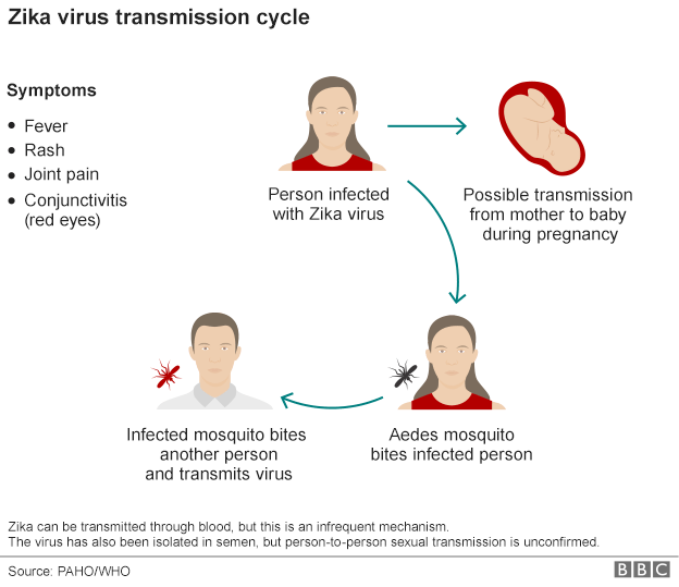Graphic of the Zika virus transmission cycle
