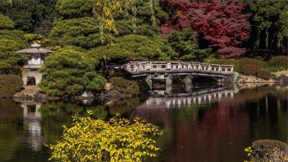 Як парк у Токіо втратив мільйони через касира, що боявся іноземців