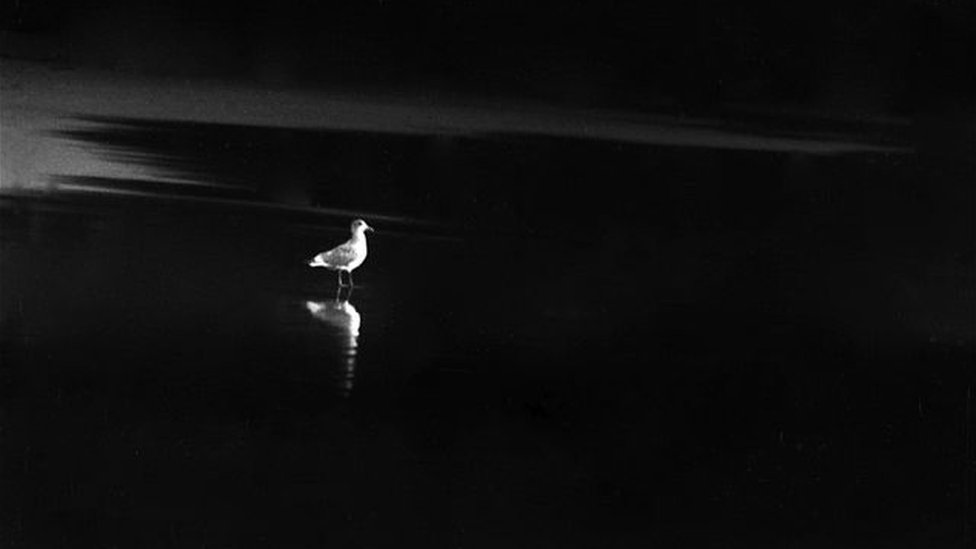 "A photo by Sunmi Smart-Cole entitled: ""Solitude"" - 1976, showing a lone bird on a beach"