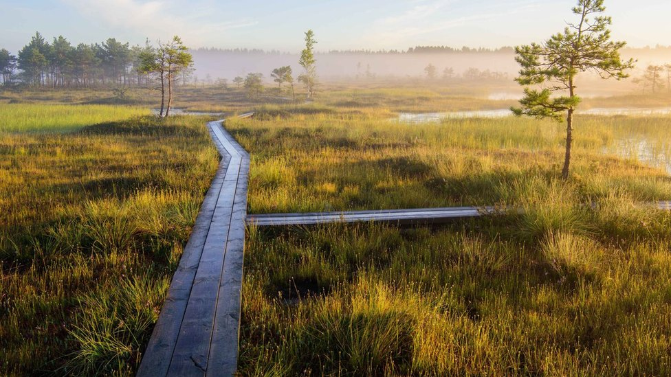 Tierra de turbas en el suroeste de Estonia