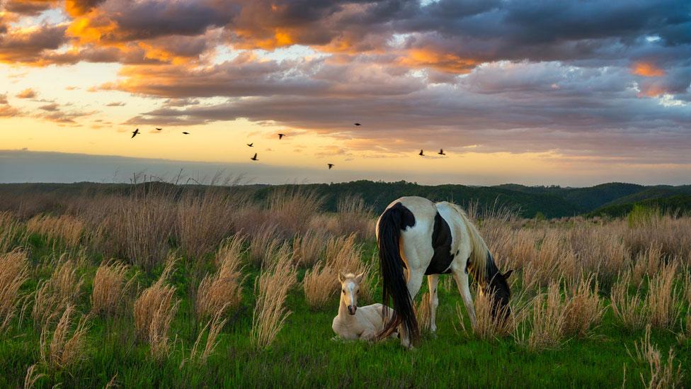 Yegua con su potrillo en tierras en Estados Unidos