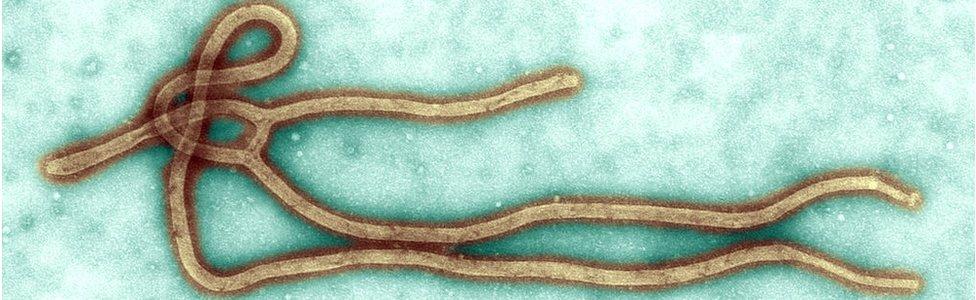 virus de ébola