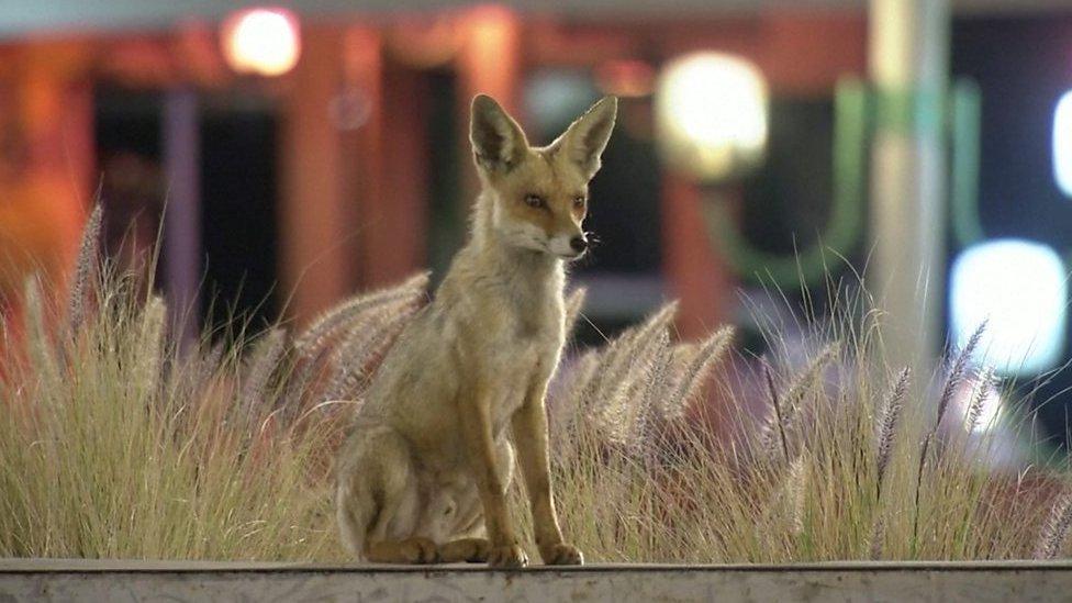 Карантин и животные: как звери захватывают опустевшие города