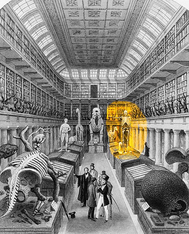 El esqueleto de Charles Byrne en un grabado mostrando el interior de Museo Hunteriano