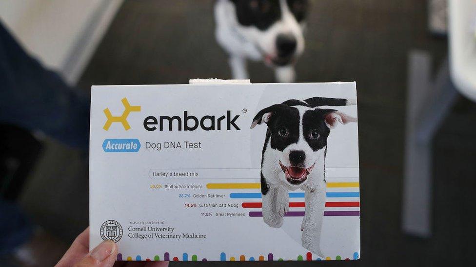 Test genéticos para perros