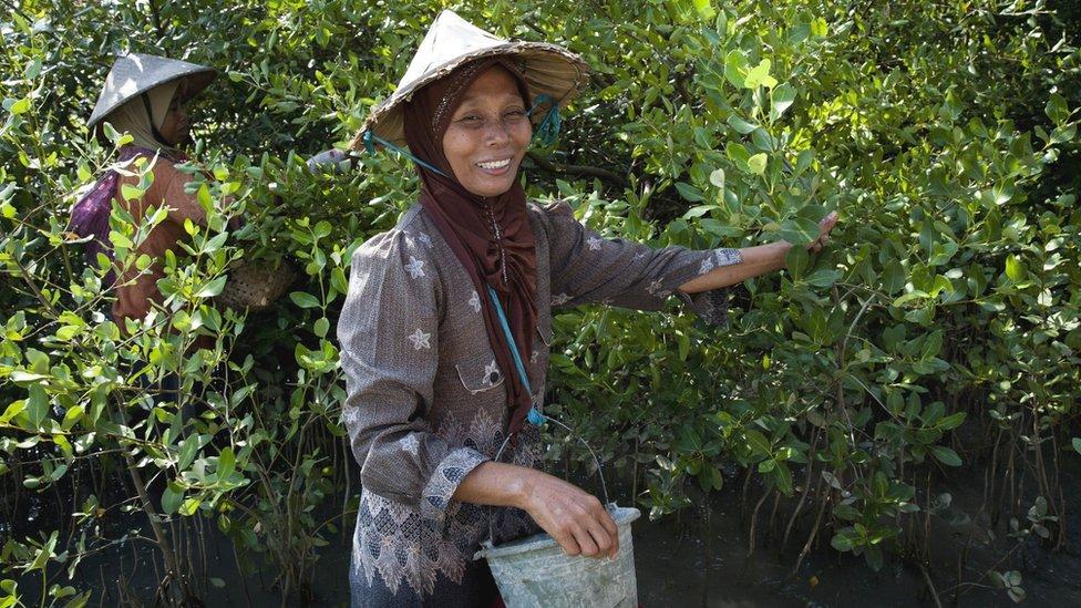Harvesting mangrove trees (Image: Wetlands International/Nanang Sujanal)