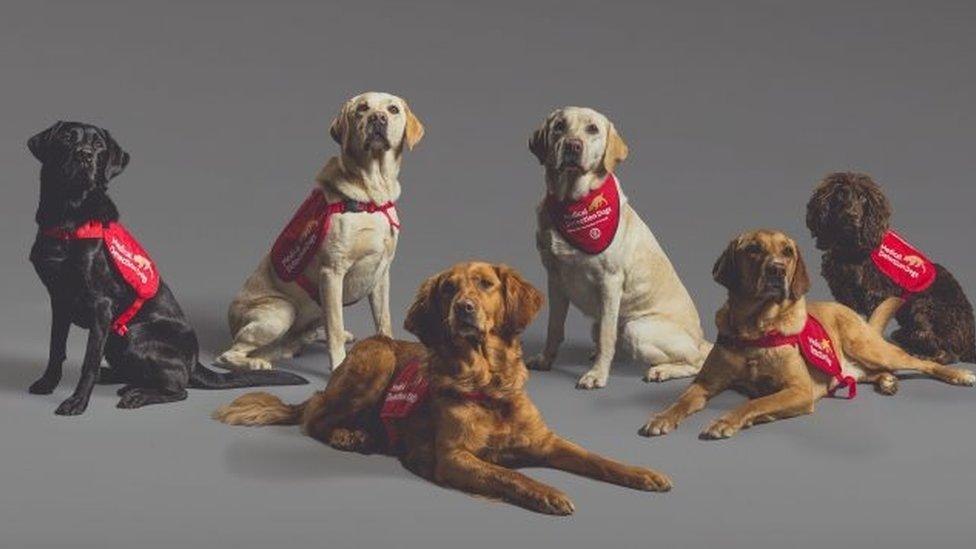 Ini dia enam anjing yang dilatih mengendus Covid.