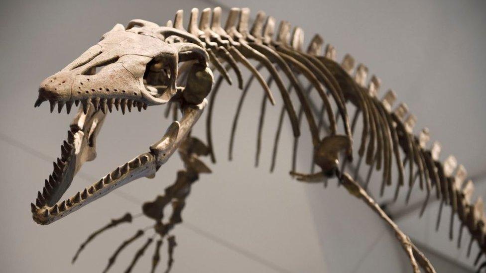 جمجمة وساصوراس عمرها 83 مليون عام.