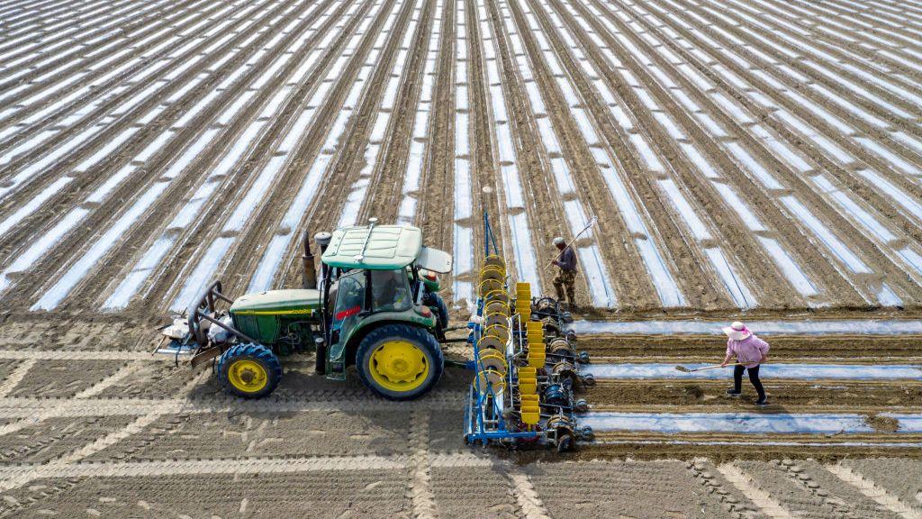 Cotton field in Xinjiang