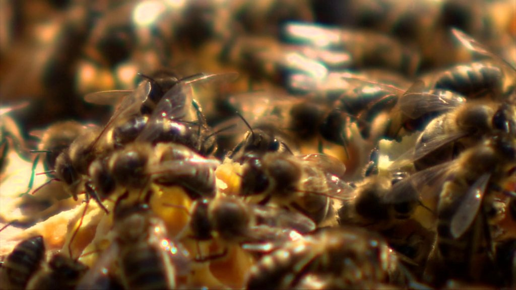 Saving the bees: The 13-year-old beekeeper