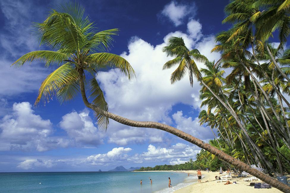 Grande Anse des Salines, Martinique, file pic