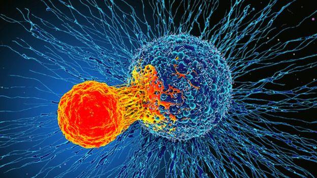 خلايا تائية تهاجم خلايا سرطانية