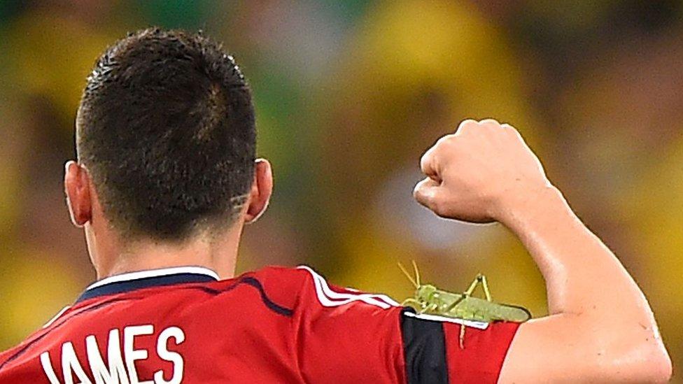 James Rodriguez merayakan gol dengan belalang di lengannya
