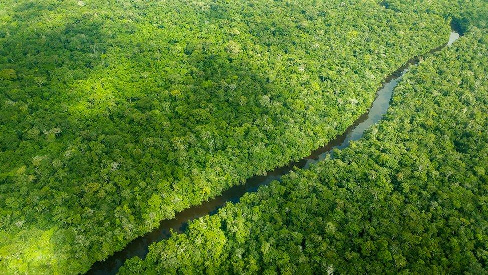 Vista aérea de la cuenca amazónica.