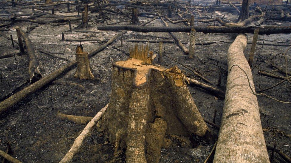 Krčenje šume