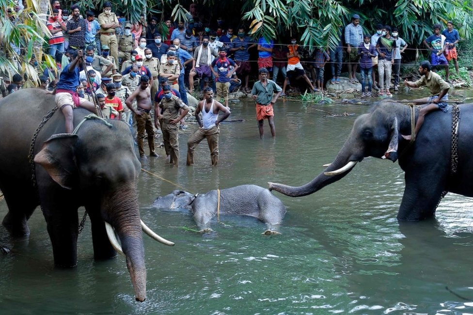 This photograph taken on May 27, 2020 shows policemen and onlookers standing on the banks of the Velliyar River in Palakkad district of Kerala state as a dead wild elephant (C), which was pregnant, is retrieved following injuries caused when locals fed the elephant a pineapple filled with firecrackers as it wondered into a village searching for food.