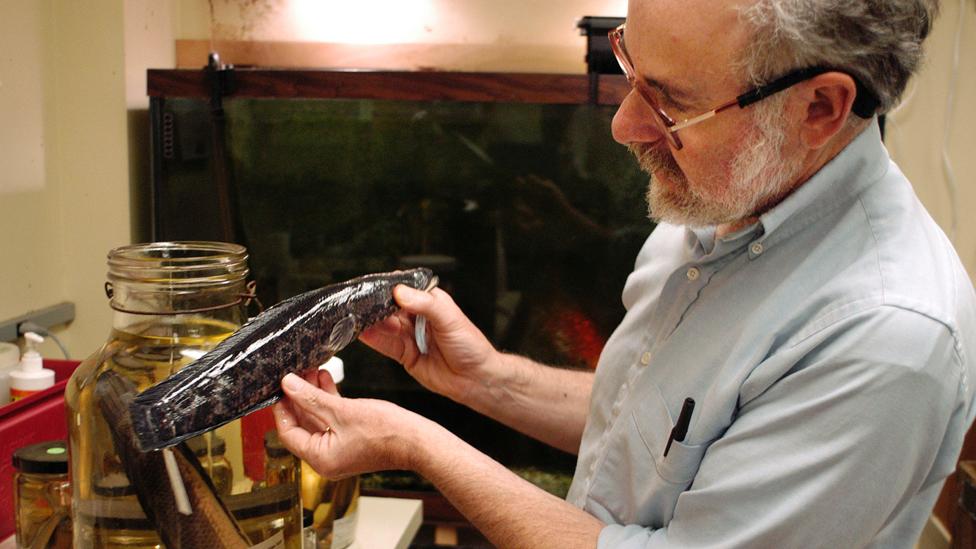 Biólogo Richard Horwitz con un ejemplar de pez cabeza de serpiente del norte en Filadelfia