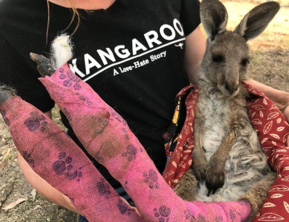 這只袋鼠是少數被救出來的幸運兒之一