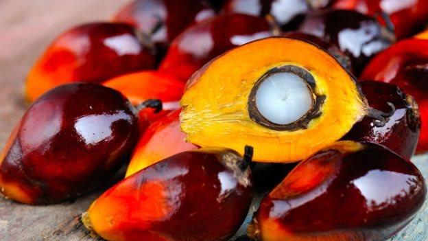 Planta de la palma de aceite