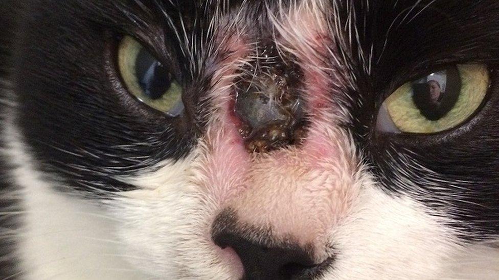 Cat shot in face at point-blank range near Faversham