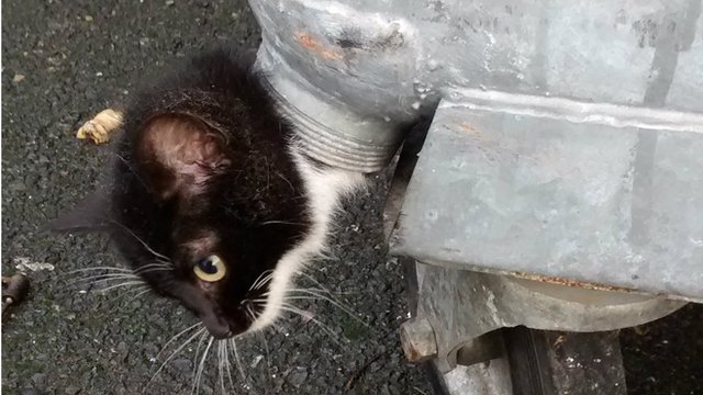 Dusty the kitten stuck in the bin