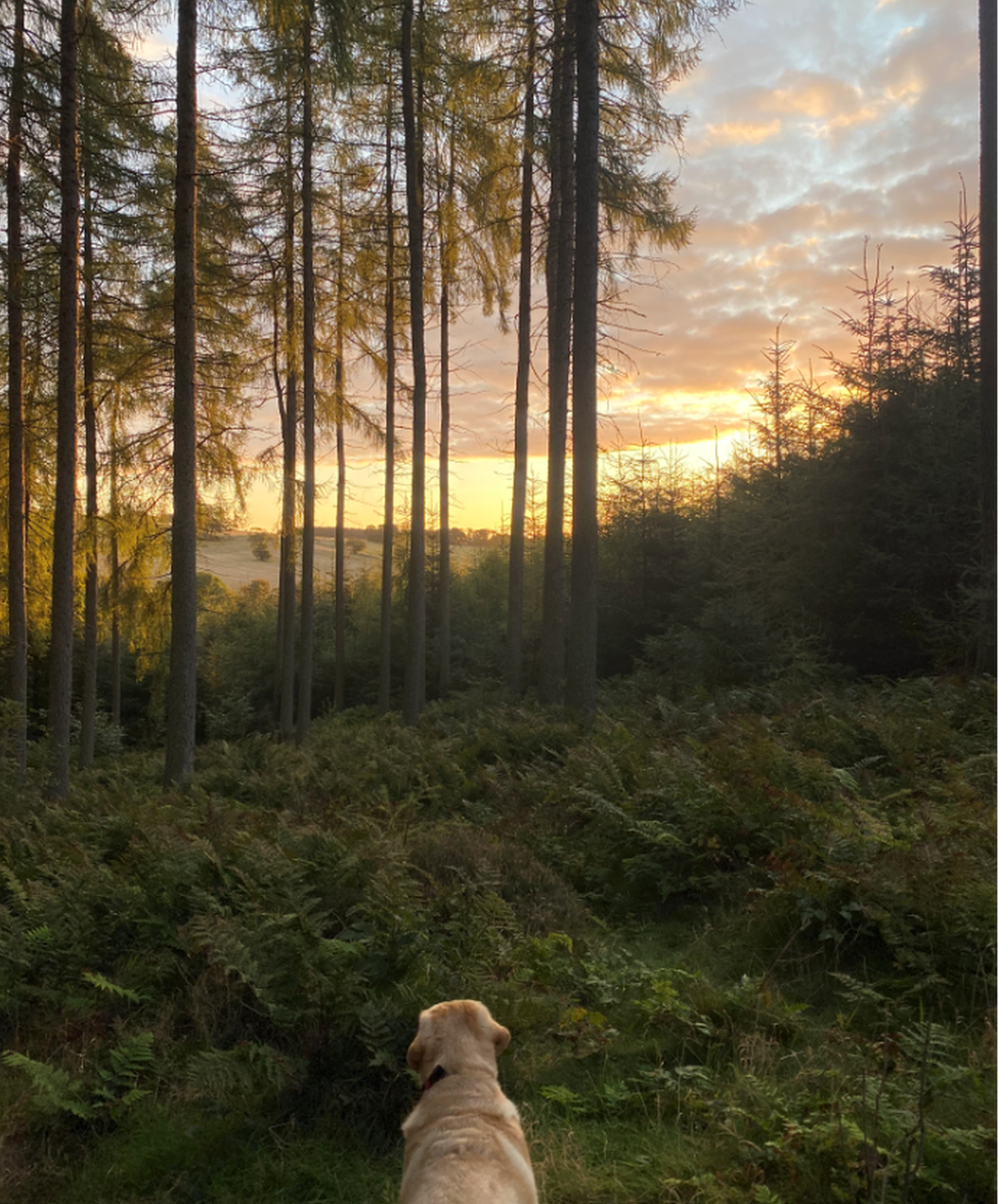 """While working from home, Sally Cruickshanks has been enjoying early-morning walks with her dog Taylor in Ink Bottle Woods on the outskirts of Stonehaven. """"It is so peaceful,"""" she says."""