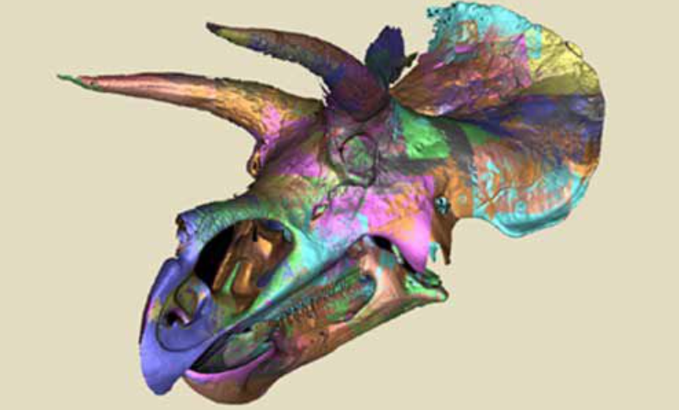 Digital scan of Triceratops (c) Smithsonian Institution