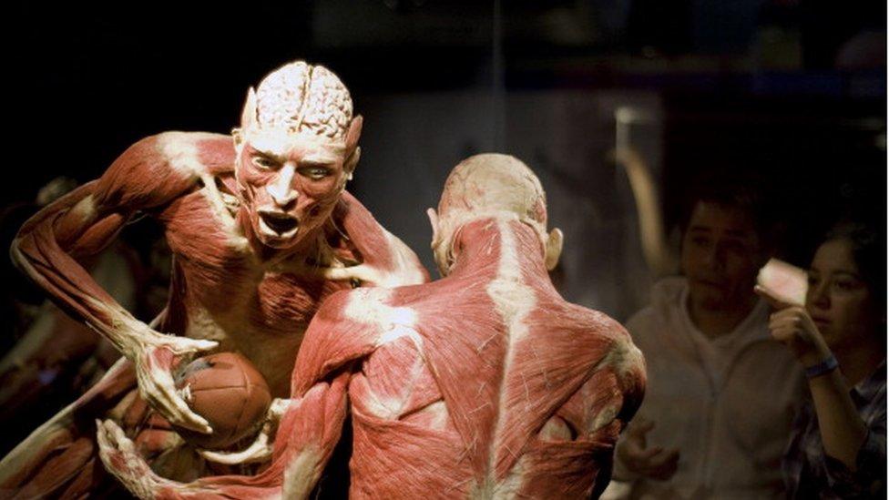 En la exposición, los cadáveres son colocados en poses como si estuvieran activos: montan columpios, caminan o practican deportes.