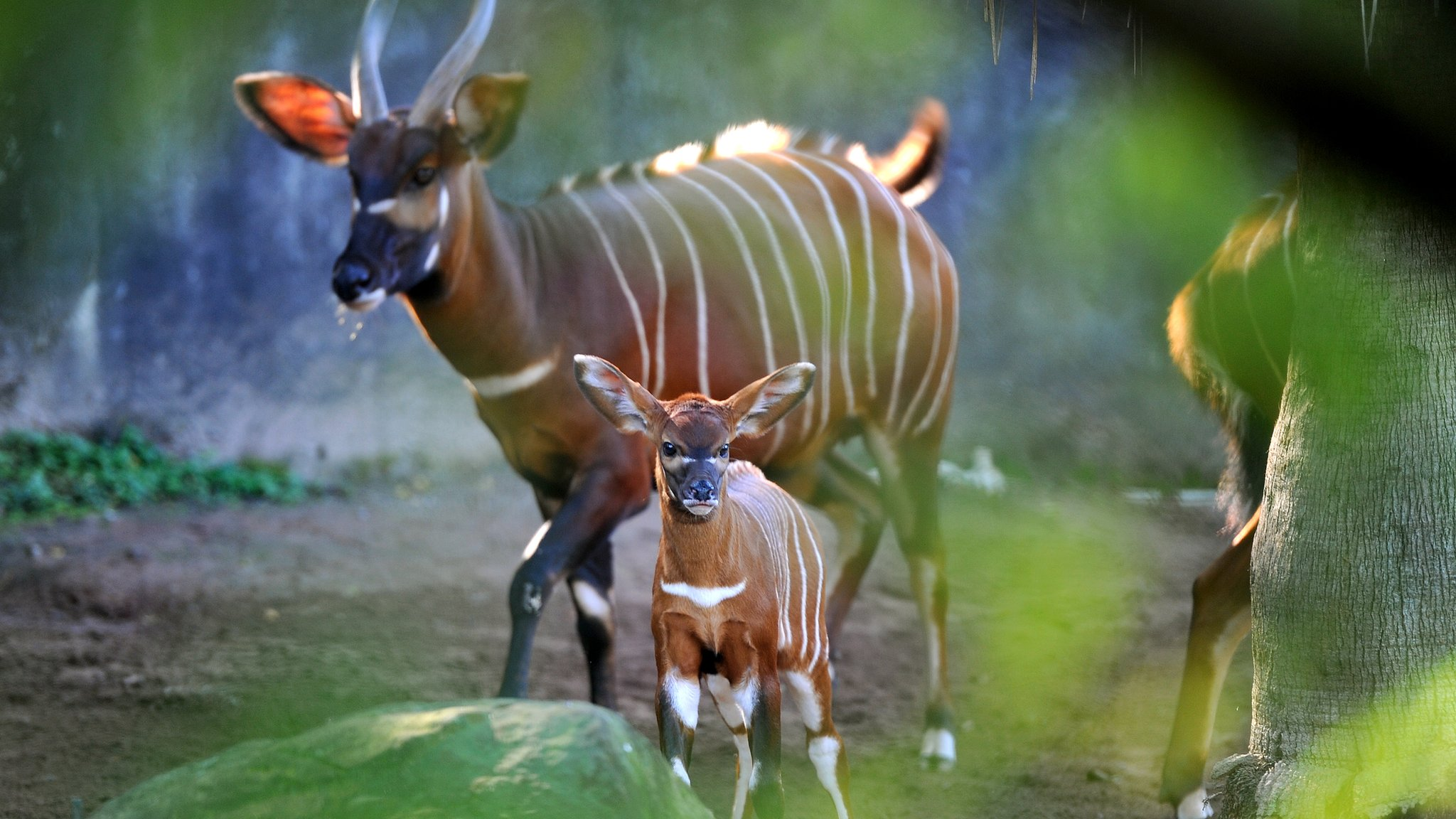 Antelope named Taylor Swift in zoo escape