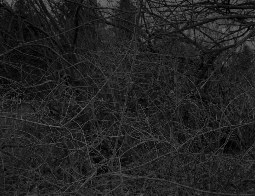 Bey-Untitled #16 (Branches with Thorns) by Dawoud Bey