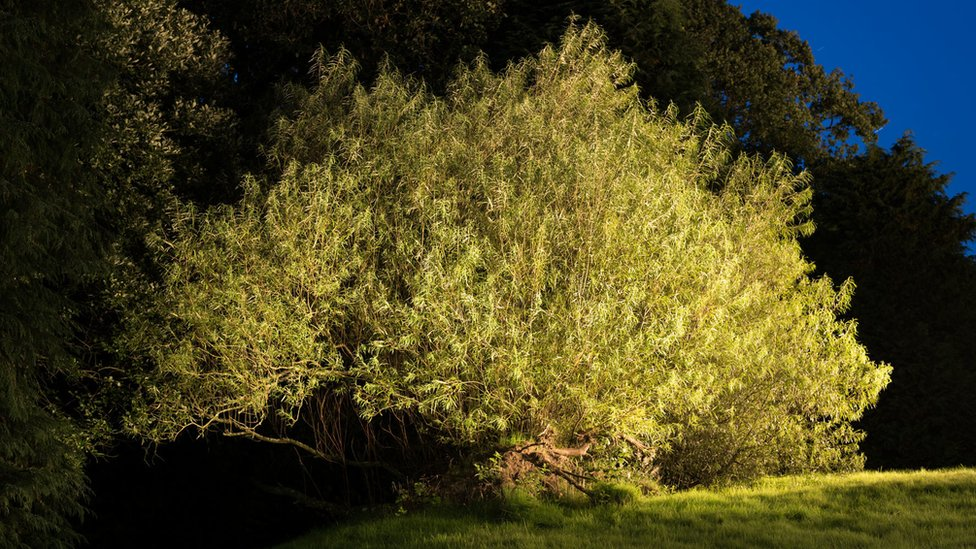 Scotland's tree of the year contenders revealed