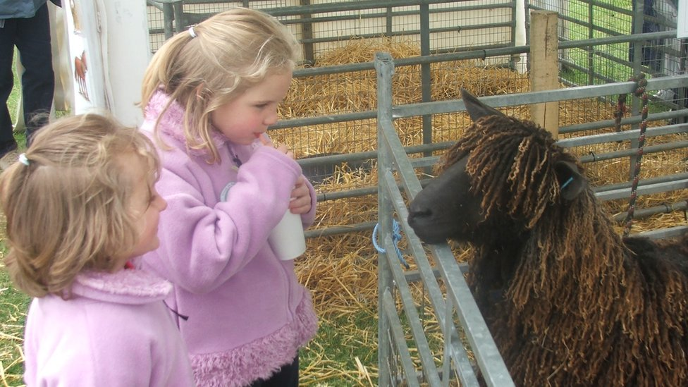 Children looking at a sheep at the Suffolk Show